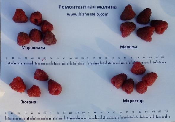 малина плоды размер