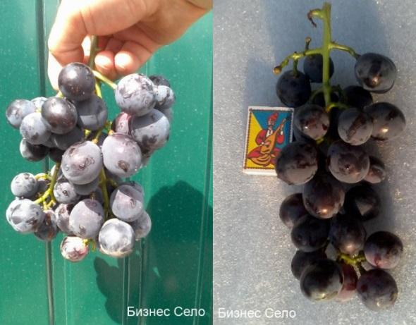 виноград Кехо
