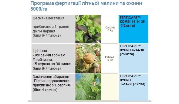 программа фертигации летней малины