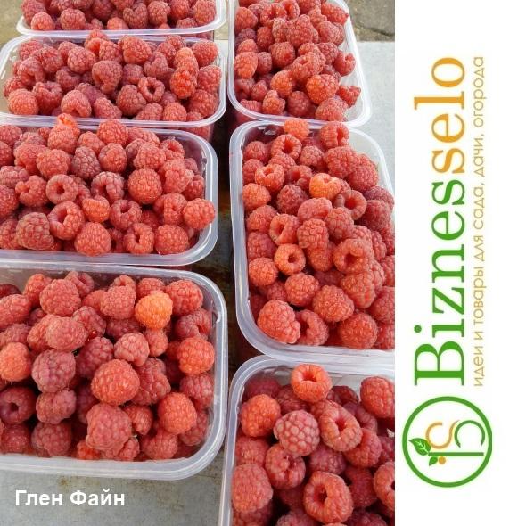 ягода малины глен файн